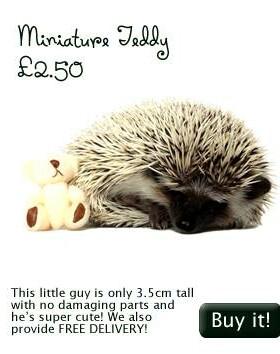 http://www.hellohedgehog.com/teddy-6